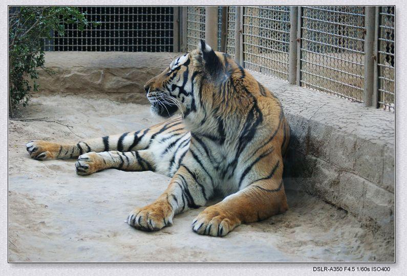 动物世界----虎狮熊猪-mingyue-搜狐博客