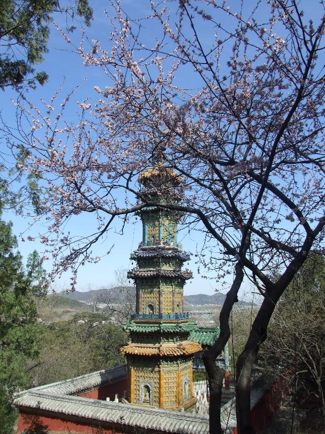 一座琉璃塔也掩映在桃花从中