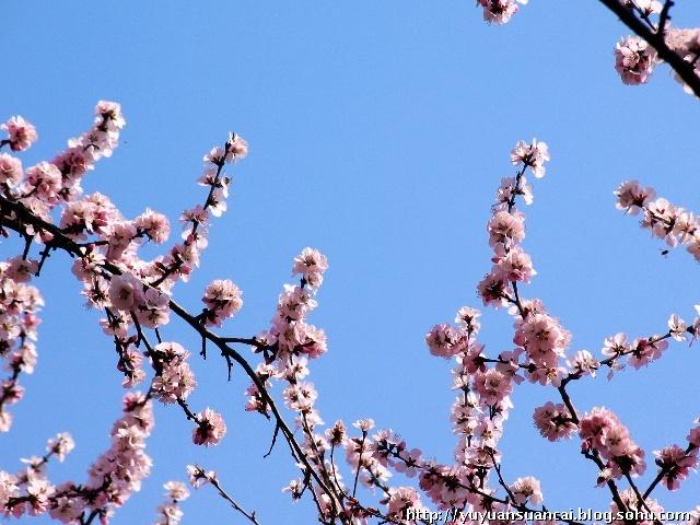 春天动物意境图片大全