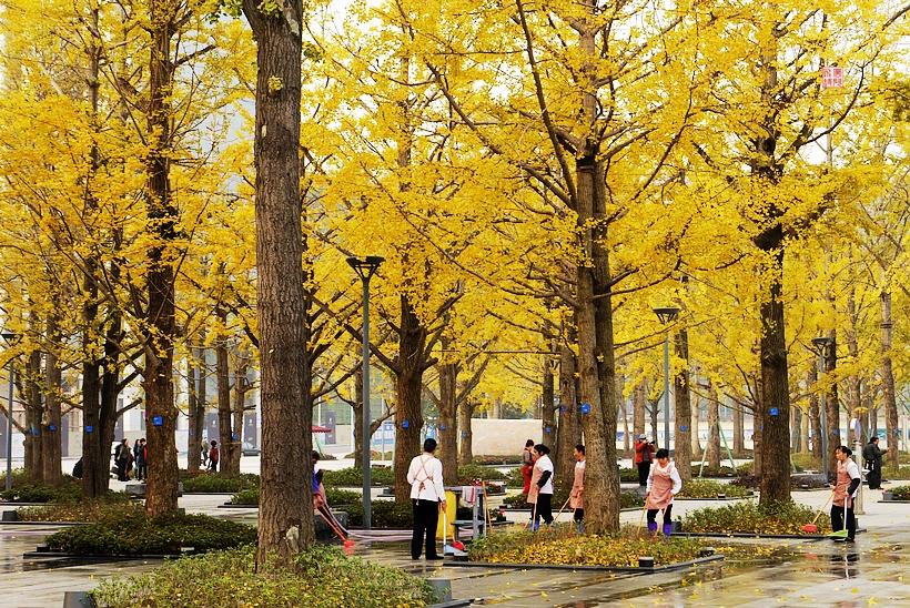 重庆两江幸福广场随拍.图片