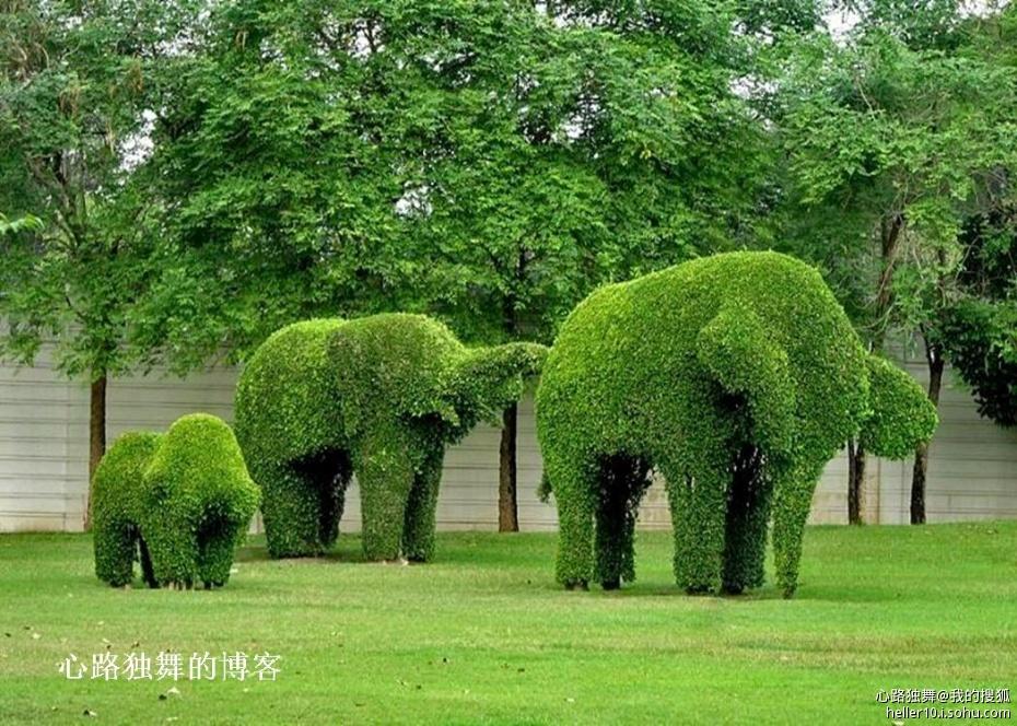 到了二十世纪中后期,树木成型的园艺技术在美国已生根开花.