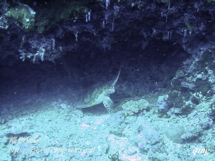 沙巴地图海龟镇