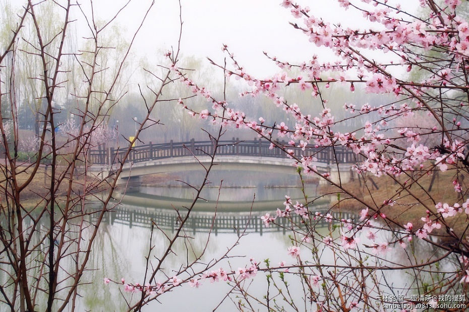 形容春天雨后空气清新的短句