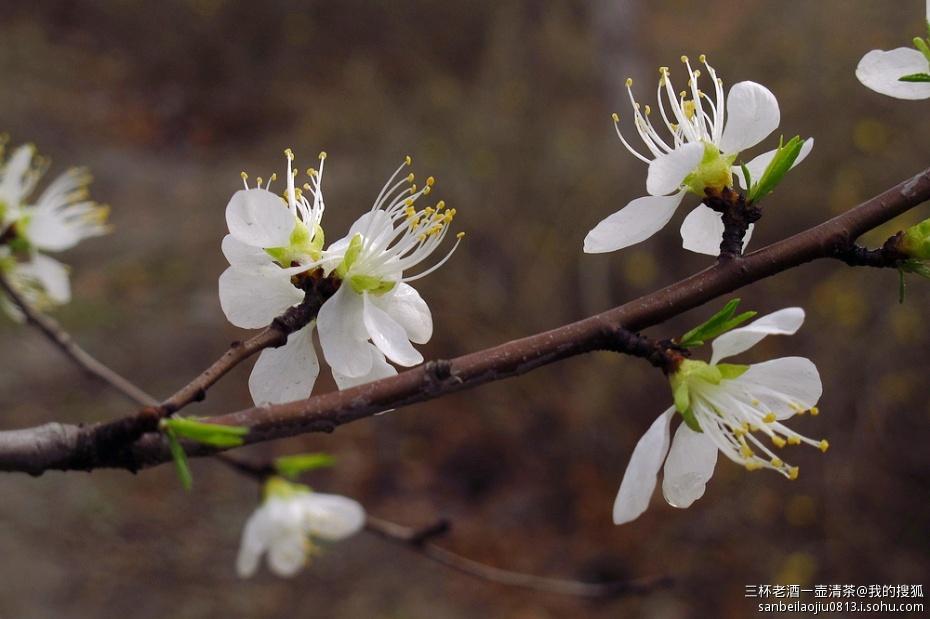 北京的春天之:生机勃勃的森林公园