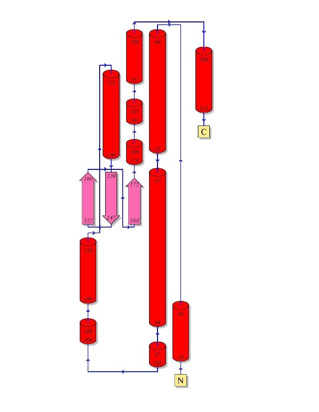 sod蛋白空间结构