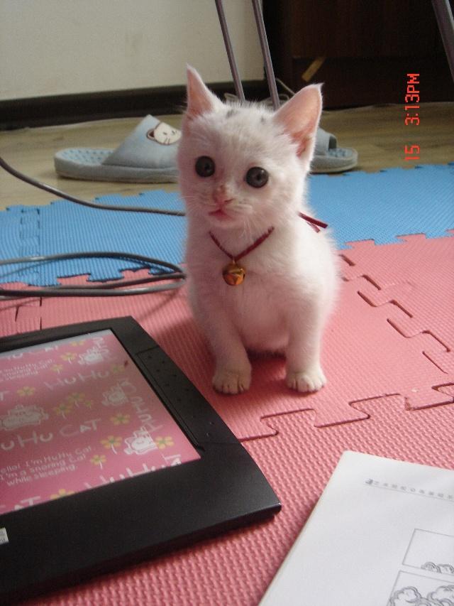 猫咪公主画画大全