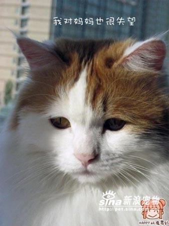 猫猫的可爱之处