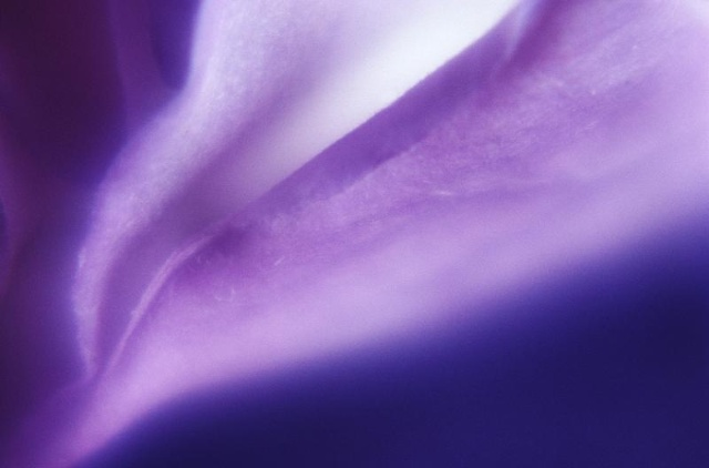 紫色手绘背影 壁纸