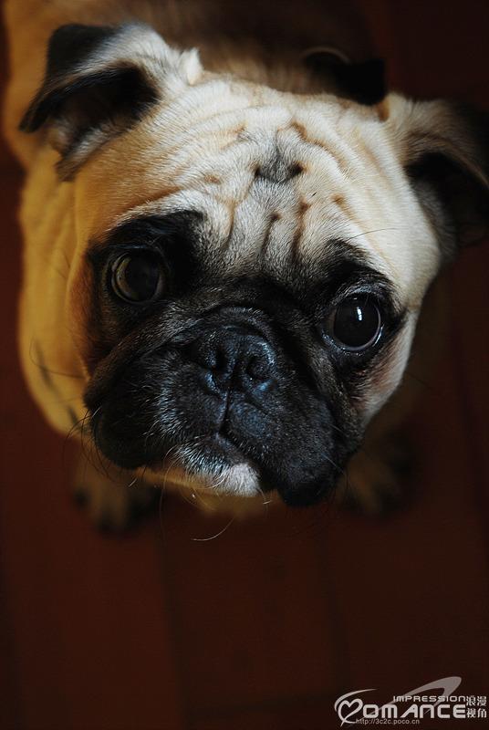 忧郁的狗狗
