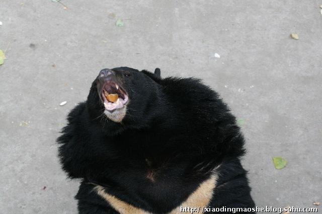 十一游北京动物园--熊山和猫