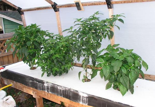 阳台农业的简易木框架栽培床气雾培系统