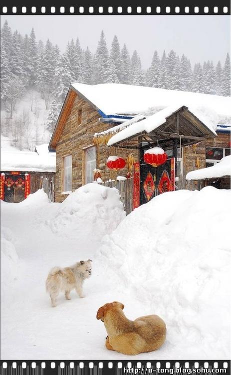 """拥着层层叠叠的积雪,百余户的居民区犹如一座相连的""""雪屋&#8221"""