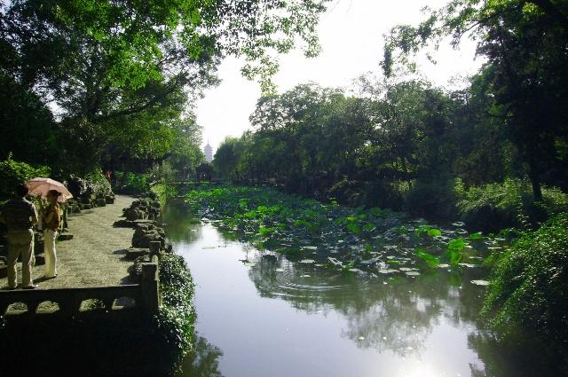 苏州拙政园荷塘柳岸