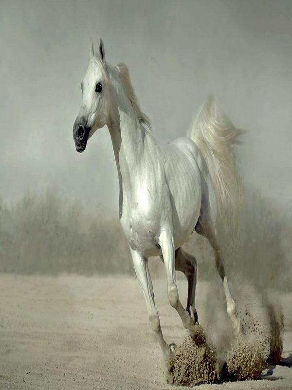 我喜欢的动物——马-一粒棋子-我的搜狐