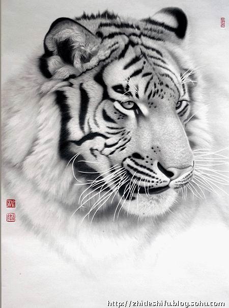 壁纸 动物 虎 老虎 素描 桌面 450_605 竖版 竖屏 手机