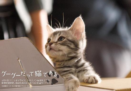 壁纸 动物 猫 猫咪 小猫 桌面 550_384