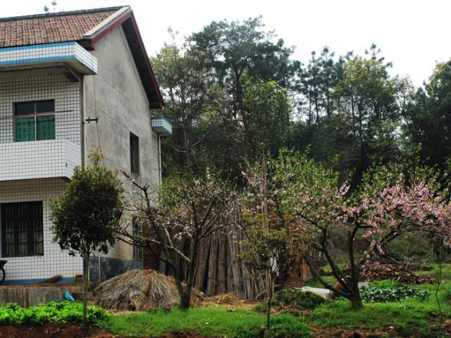 没时间去祁东,只好在衡阳市郊区看看油菜花,感觉那种一瞬间的明亮.