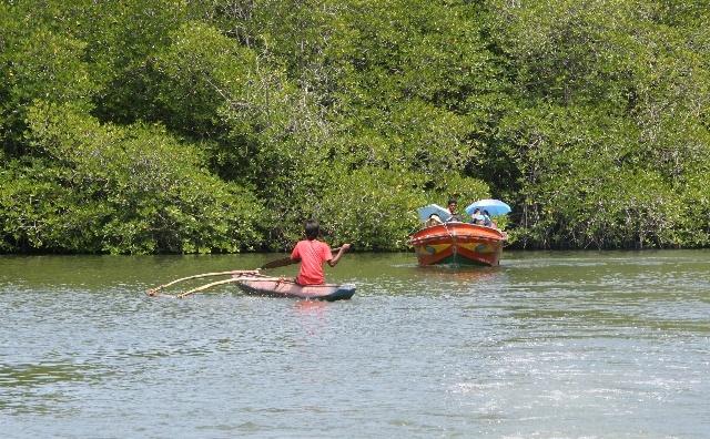 想起在民丹岛的红树林之旅很刺激