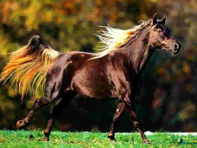 2012原创诗歌 风中的马