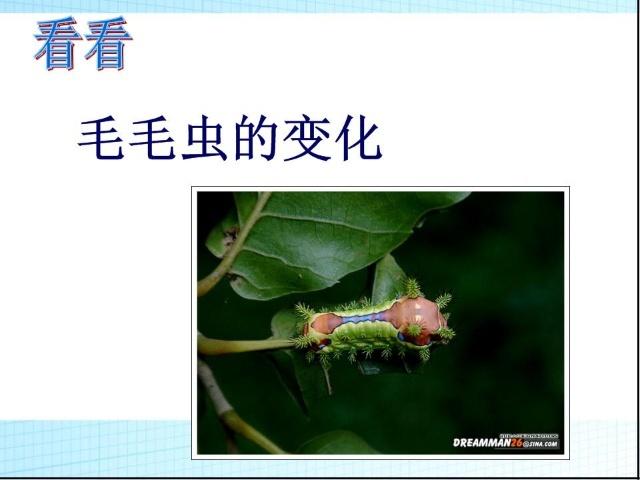 蜻蜓身体结构说明图