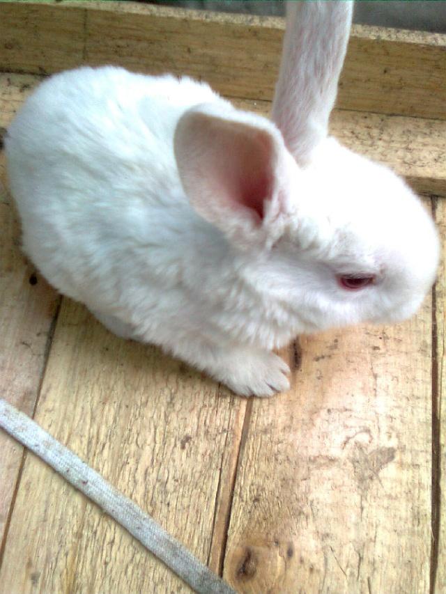 (原创)《小兔子》-活灵活现371674的空间-搜狐博客
