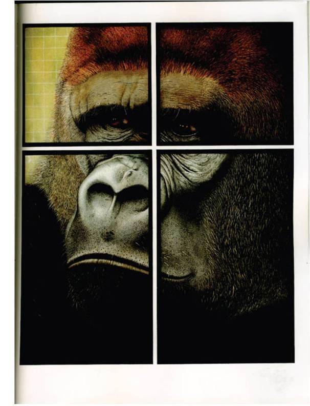 【每晚绘本故事】——动物园